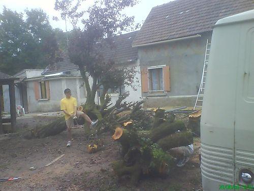 Giao arbre abattu